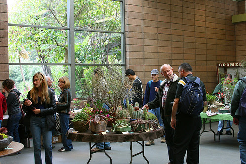 cactus and succulent society displays