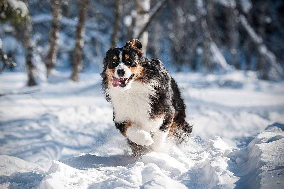 10 Best Hiking Dog Breeds | HiConsumption