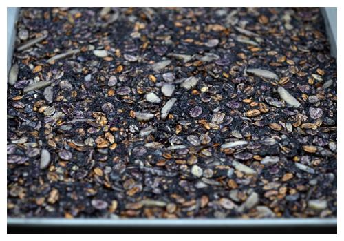 Purple Carrot Flapjack© by Haalo
