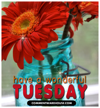 Have A Wonderful Tuesday Gerbera Daisies Commentwarehouse Say It