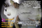 rabbit breast tumours toapayohvets singapore