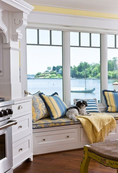 View, dog, yellow and blue.