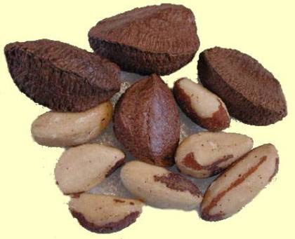 brazil nuts selenium dr gregory house