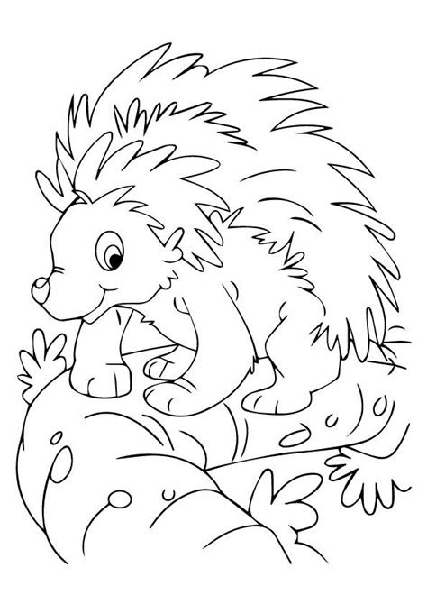 print coloring image porcupines books crafts decor