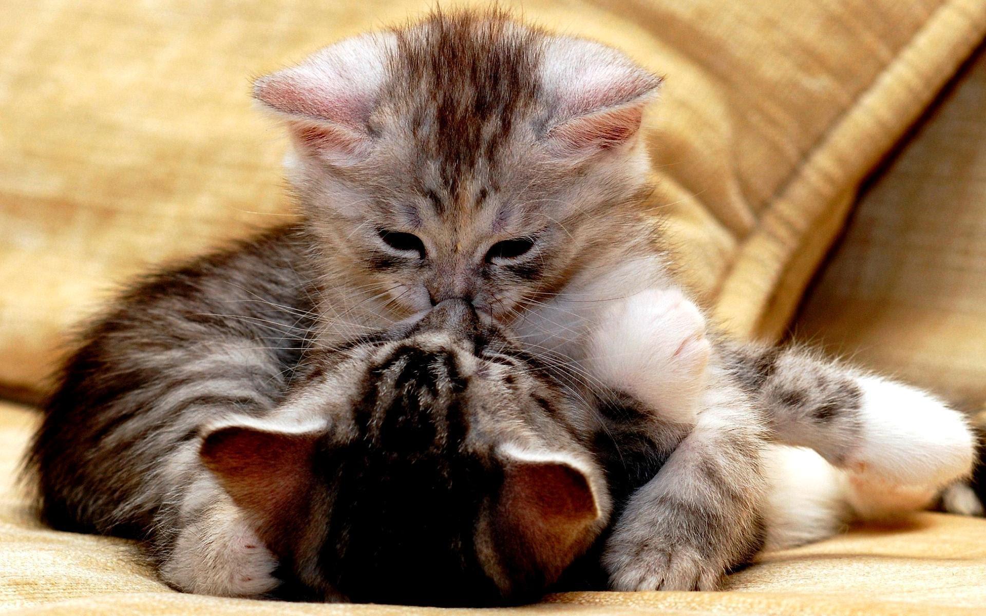 Unduh 95+ Gambar Lucu Cium Kucing Paling Bagus Gratis
