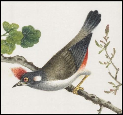 Bird Album j (detail)