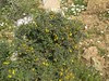 aspalathos hiliomoudou hania chania