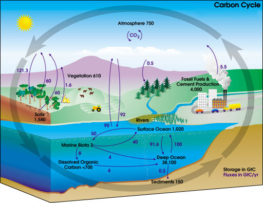 Ficheiro:Carbon cycle-cute diagram.jpeg