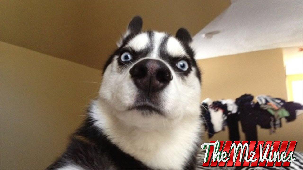 Fotos de cachorros engra%C3%A7ados 1