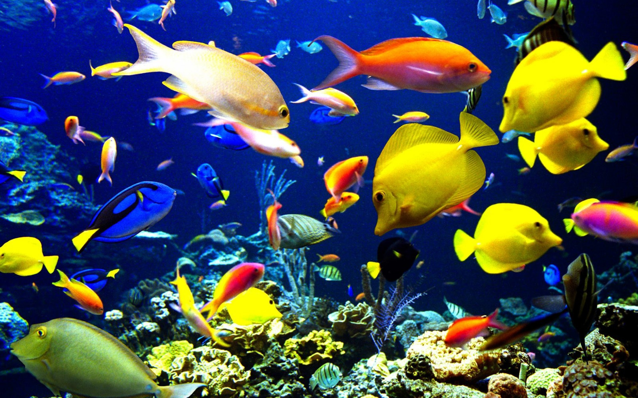 Ocean Fish Wallpaper 62 Images