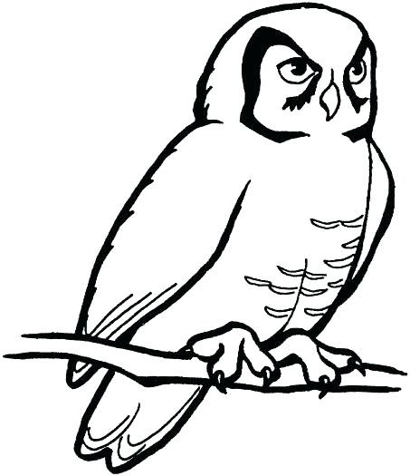White Owl Drawing At Getdrawingscom Free For Personal Use White