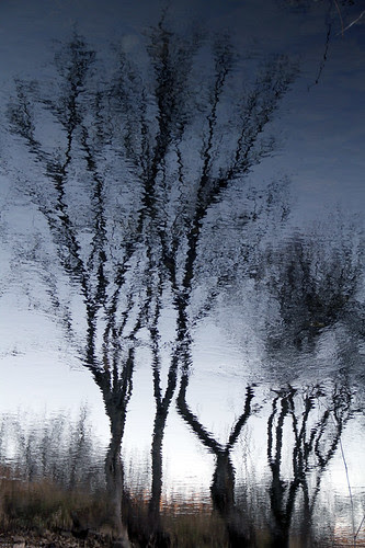TREES REFLECTION by juanluisgx