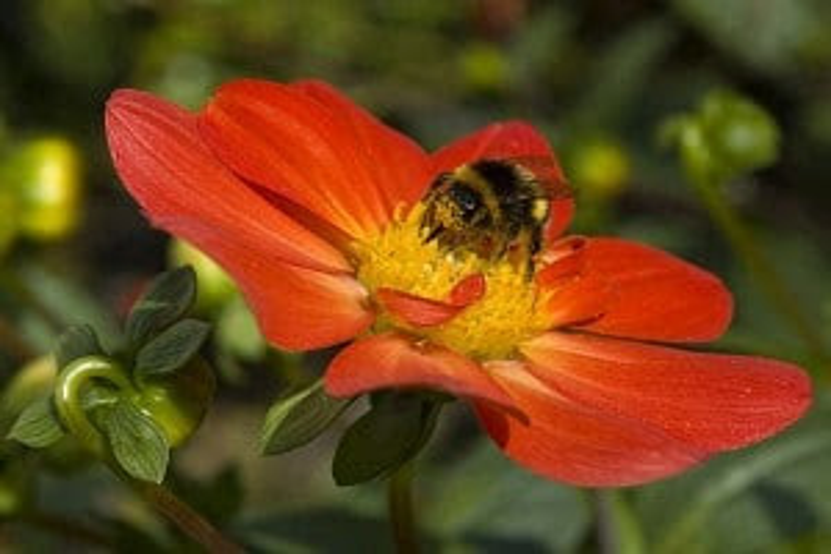 Flickr - Bee -  chat numérique