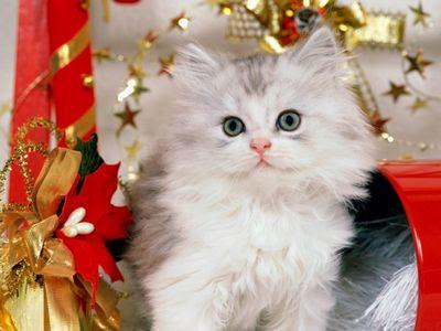 Unduh 530+ Wallpaper Kucing Cantik HD Terbaru