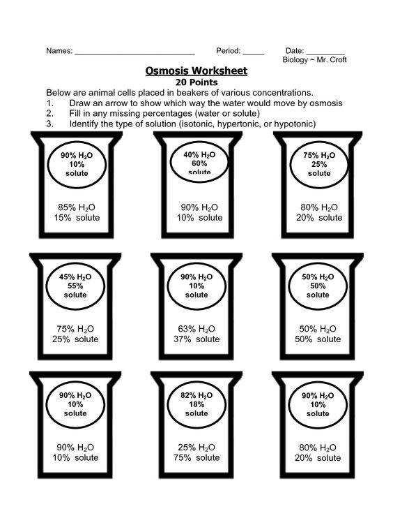 Diffusion and Osmosis Worksheet  Homeschooldressage.com