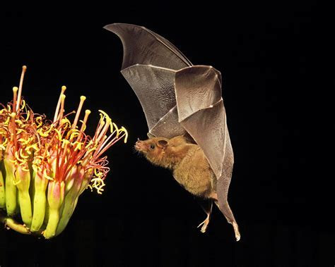 10 Reasons You Should Love Bats : The National Wildlife Federation Blog