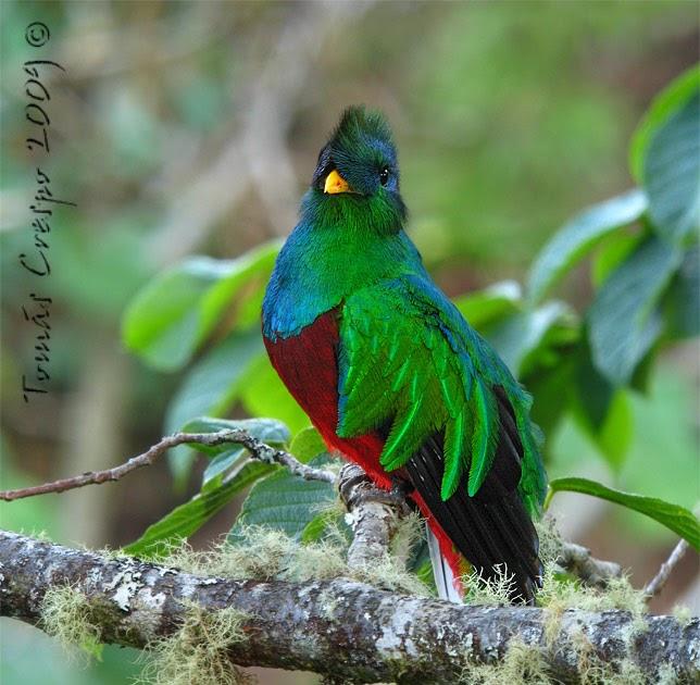 Julio Cesar Lopez El Quetzal Ave Nacional
