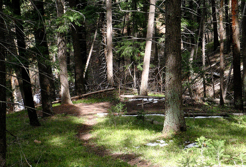 Bear Camp...Yes, I've seen bears rummaging around this area.