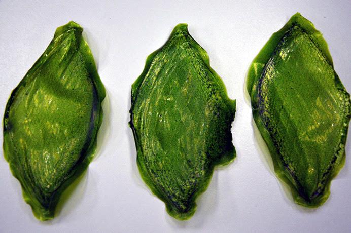 silk-leaf-2
