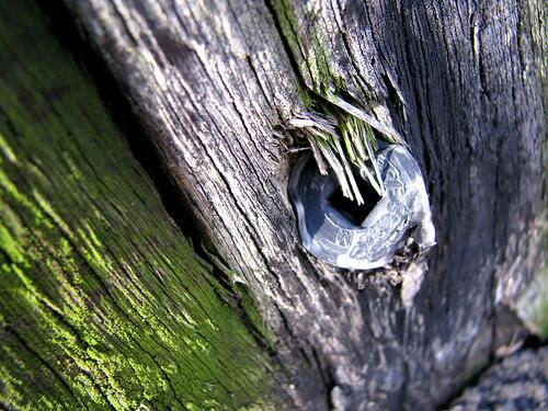 moss, wood, spike