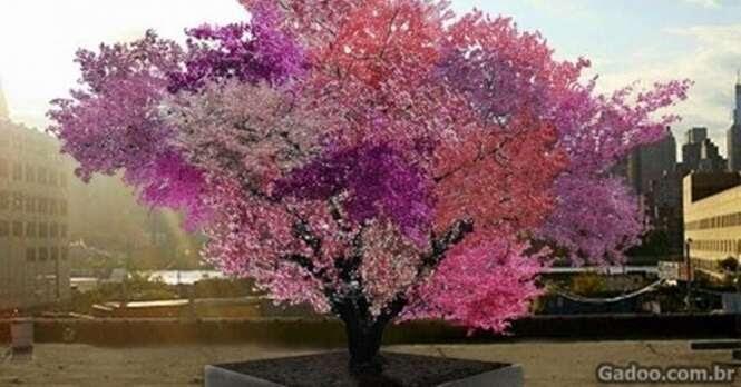 Conheça a árvore incrível onde crescem mais de 40 frutos diferentes