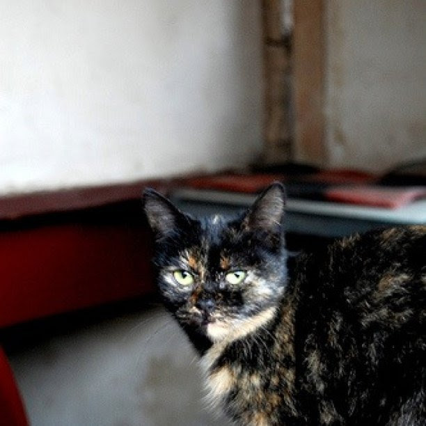 Edith cat