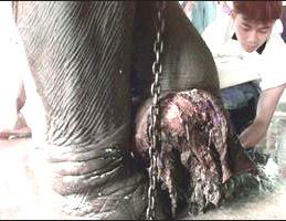 Motala's wound