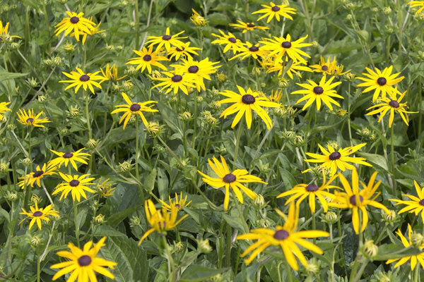 Free stock photos - Rgbstock -Free stock images | Yellow flowers ...