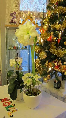 Joyeux Noël! by Anna Amnell
