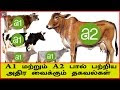 A1 vs A2 Milk Explained in Tamil