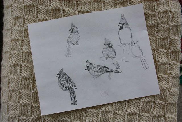 Cardinal Sketches