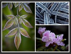 Sugar Coated Landscape (Week7) by Kinematic Digit