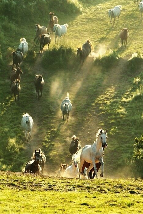 """Wild horses!   We'll ride them someday! ...And He said, """"Who will ride with Me?"""""""