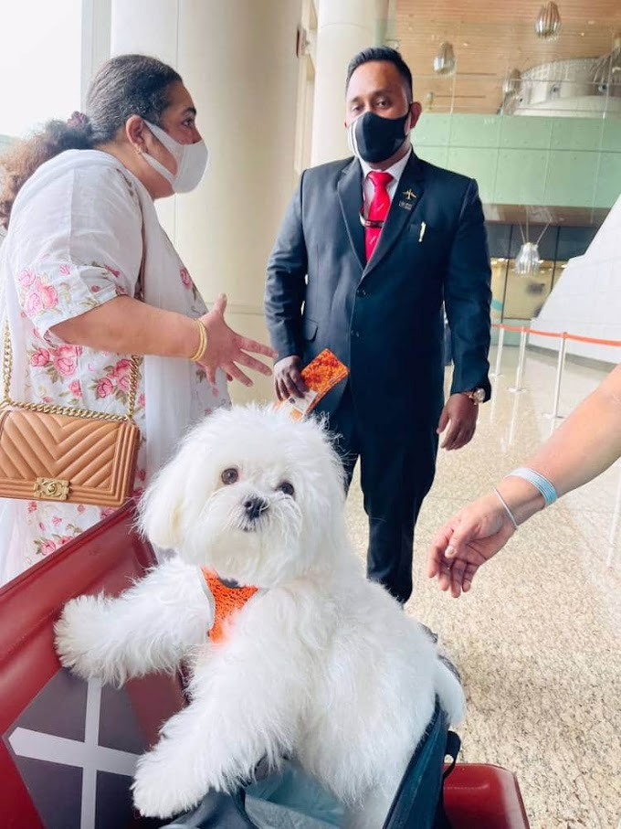 Woman books entire business class cabin to fly with her dog