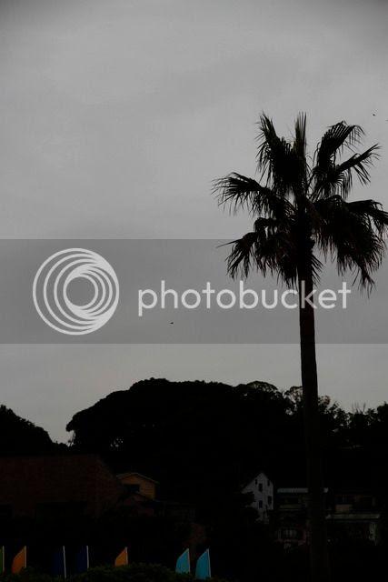 photo _MG_6582_zps3aucwcwj.jpg