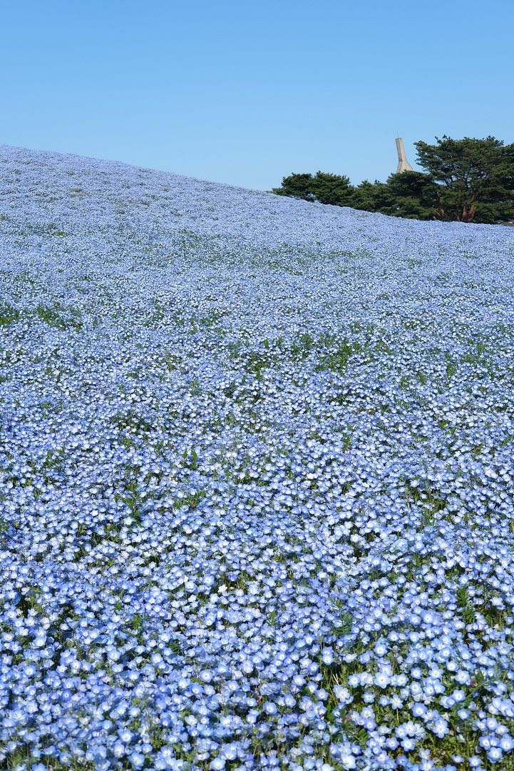 photo Hitachi Seaside Park Ibaraki Japan 5.jpg