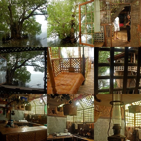 Mangrove House collage