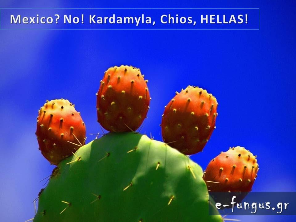 tilestwra.gr : 311 Υπάρχει Παράδεισος στη γη; ΥΠΑΡΧΕΙ και βρίσκεται φυσικά στην Ελλάδα! Δείτε τον...