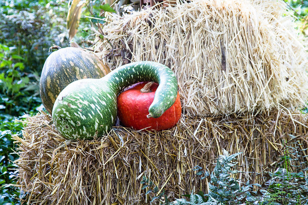 what do you see? A squash and a pumpkin, or a green goose?