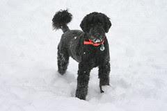 skippy in the snow