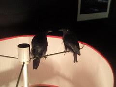 lamp ravens
