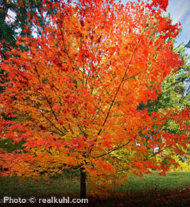 Fall Foliage Trees The Good The Bad And The Invasive Arbor Day Blog