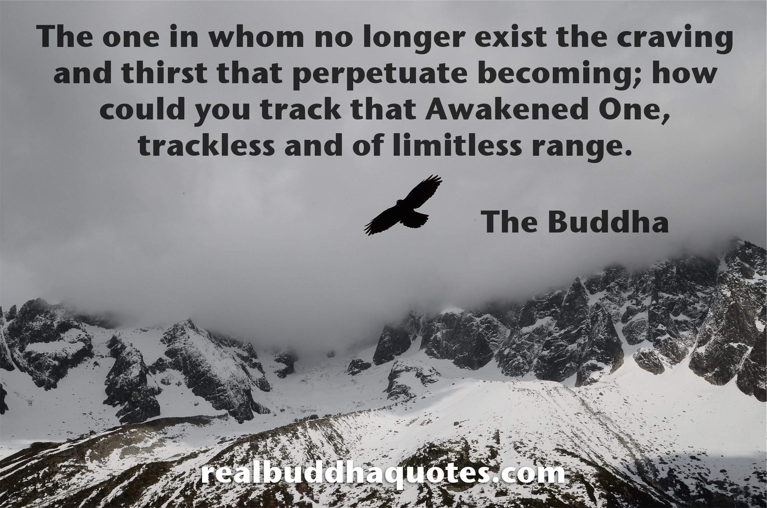 Awakening Real Buddha Quotes
