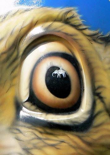 Eye & Elephant
