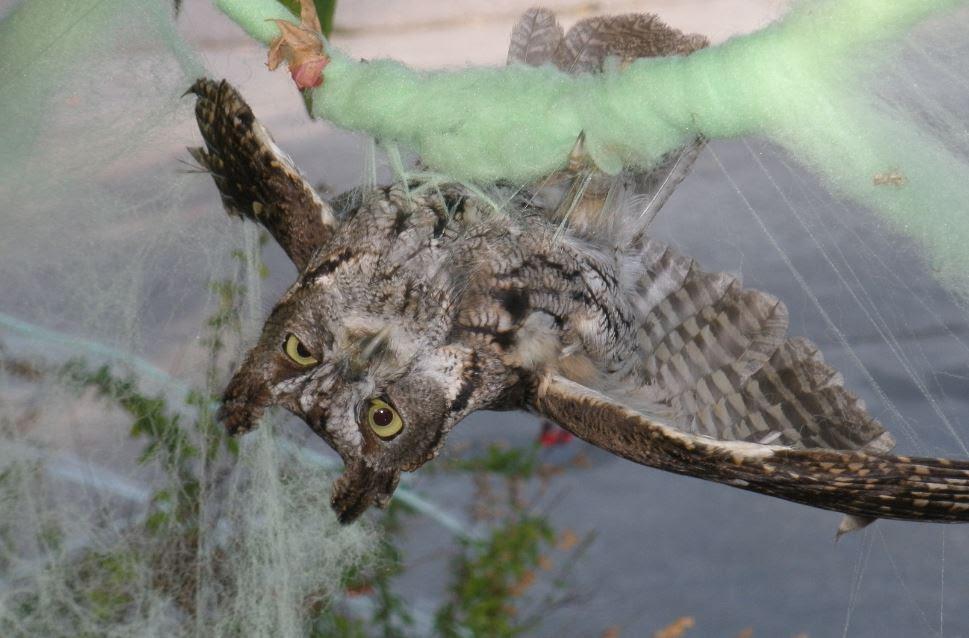 StappDave_halloween screech owl.JPG
