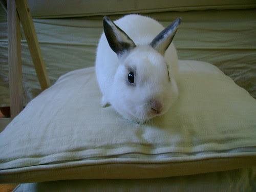 mr b loves this pillow