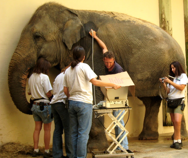 Washington dc zoo careers, how does social media affect employment