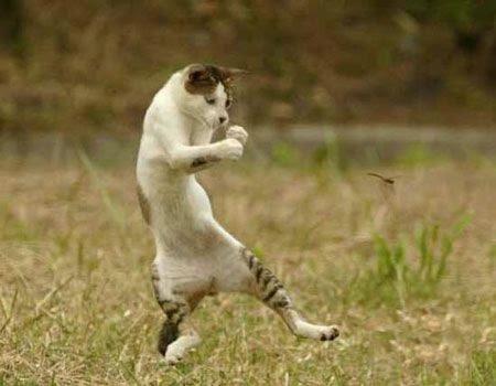 funny_cats_36 (450x350, 57Kb)
