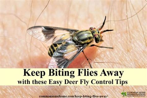 Deer Fly Control and Deterrent Tips to Keep Biting Flies Away