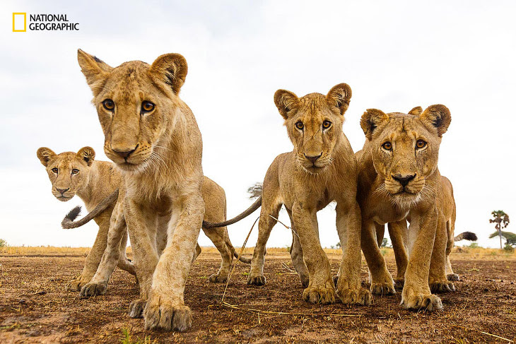 National Geographic: кращий природний фотограф року